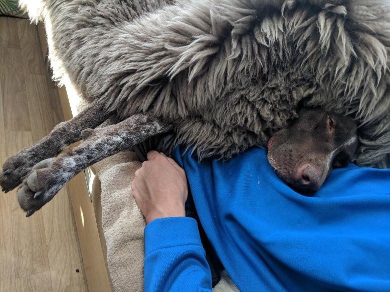 Dog with Sheepskin Blanket