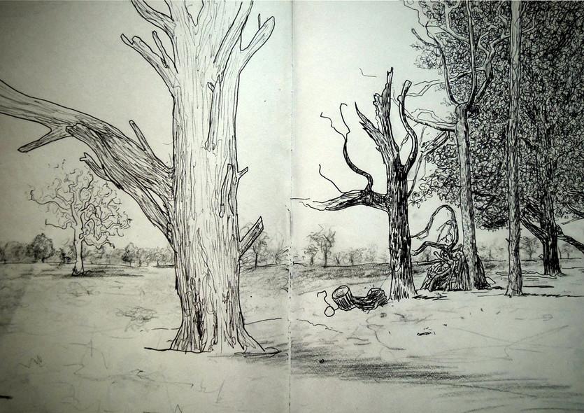 9. Bushy Park - ink & charcoal.jpg
