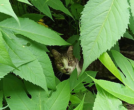 Kitty in Bushes.jpg
