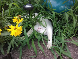 Kitty Chilln' in Flower Bed.jpg
