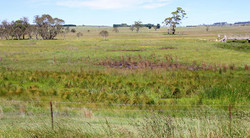 Snowy River Interstate Landcare Comm
