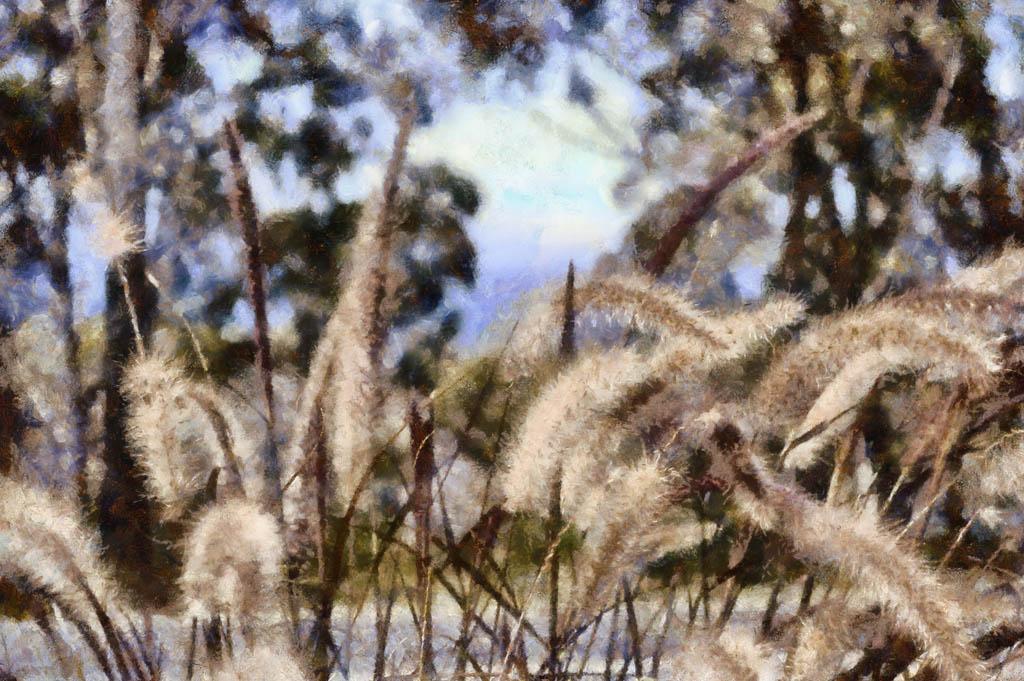 Bushgrasses