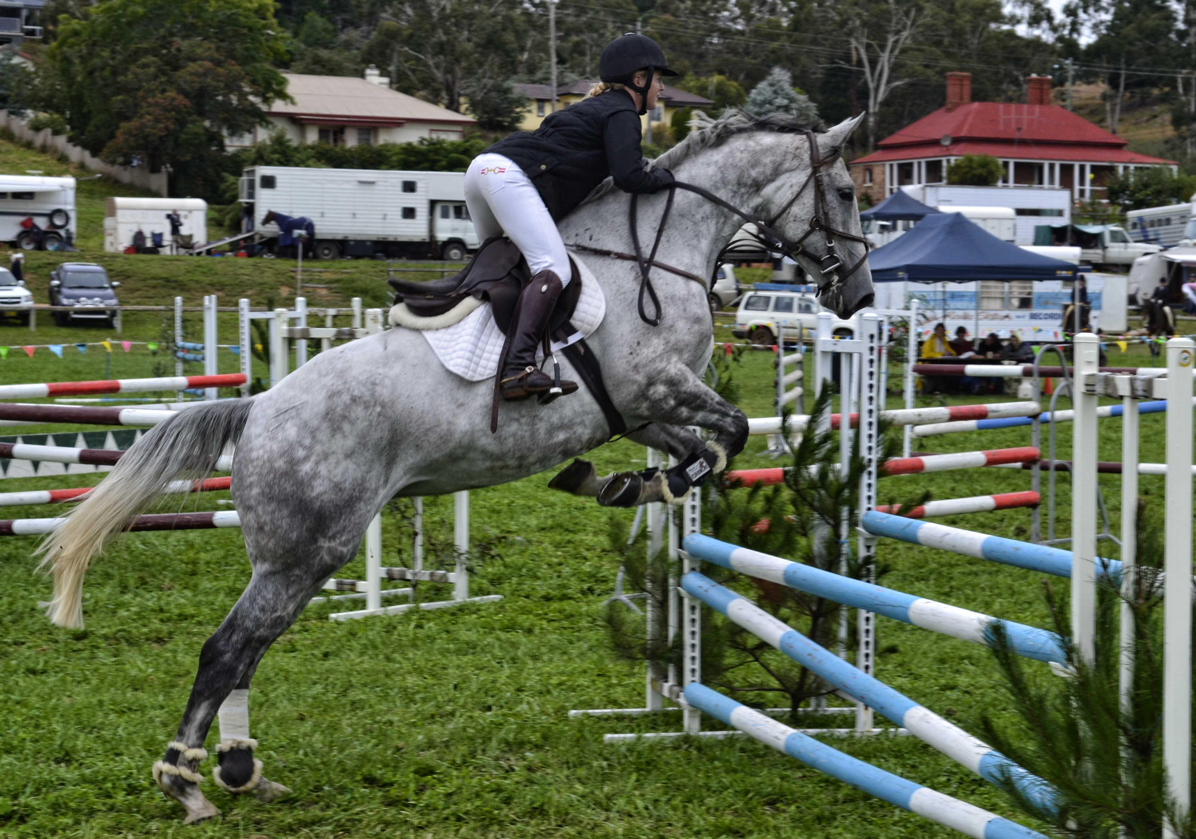 Grey Horse Jumping