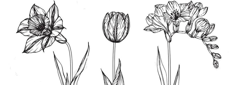 89404875-daffodil-tulip-freesia-flower-d