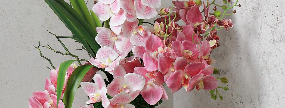 Композиция с орхидеями  с орхидеями в кашпо