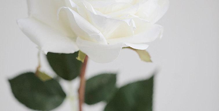 Роза крупная