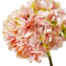Декоративные цветы MYBLUMM