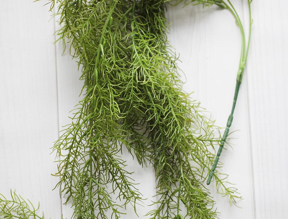 Аспарагус зелень