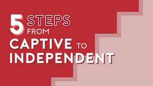 5 Steps from Captive to Independent