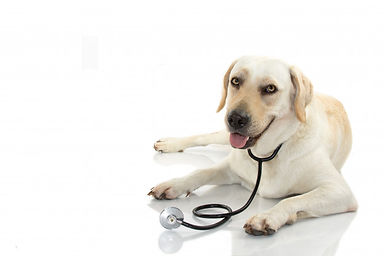dog-with-stethoscope-lying-down-against-