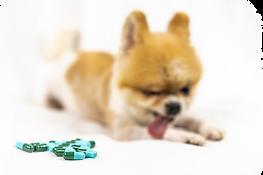 veterinary-medicine-pet-animals_42691-16