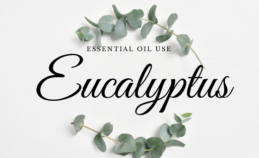 Uses for Eucalyptus Essential Oil