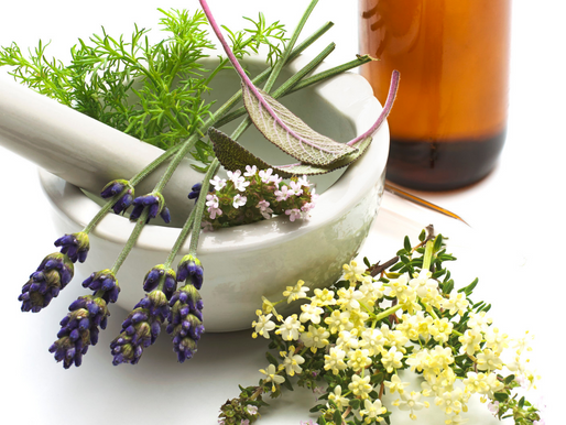 My Plant Medicine Journey- Part 1