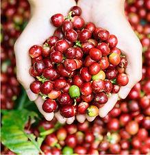 The Health Benefits of CBD & Coffeeberry