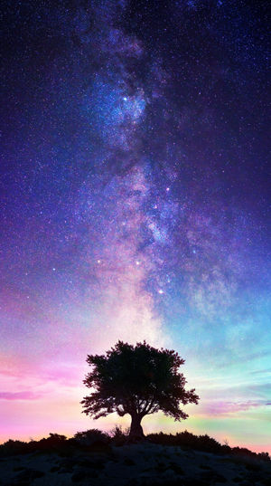 Tree on horizon with Milky Way in te sky