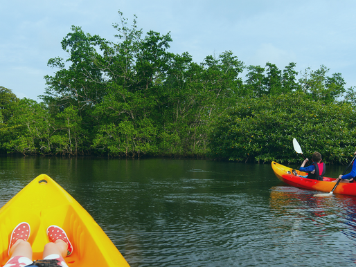 Taking Your Family Out in The Everglades