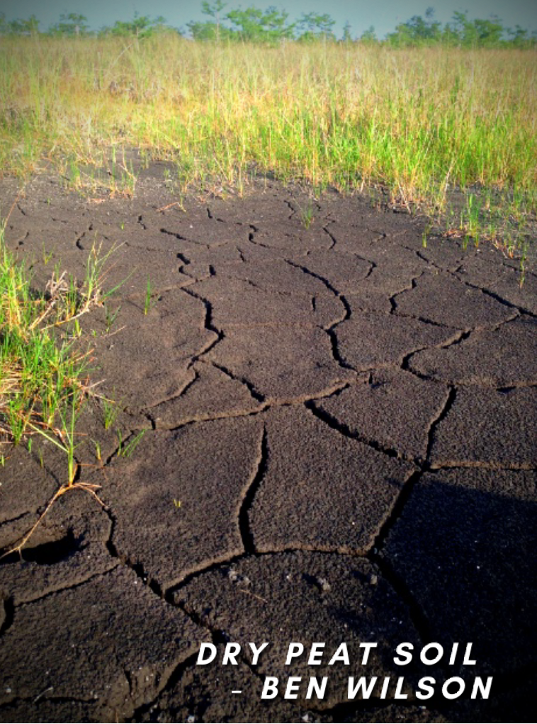 sea level rise, climate change, climate change mitigation, everglades
