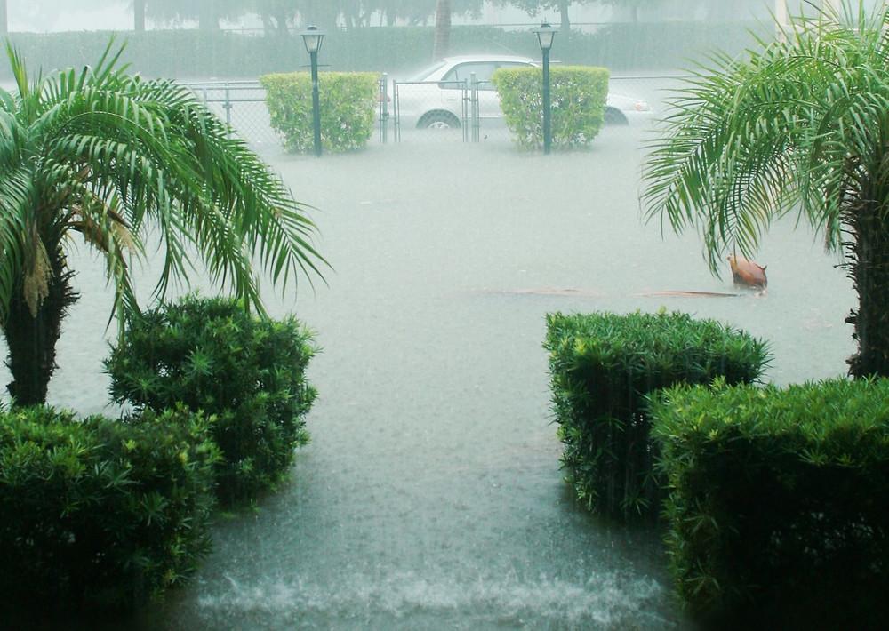 sea level rise, climate change, climate change mitigation, everglades and climate change, everglades restoration