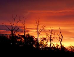 Launceston Wildlife Retreat sunset