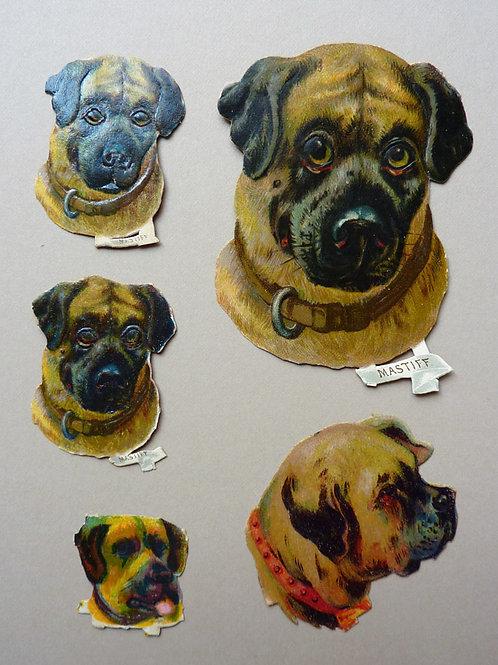 Five Mastiffs