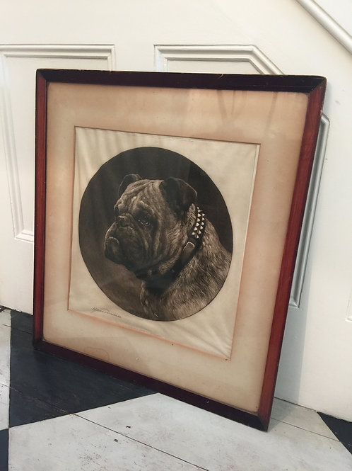 An Original Limited Edition Bulldog Portrait Signed Dry Point Etching by Herbert
