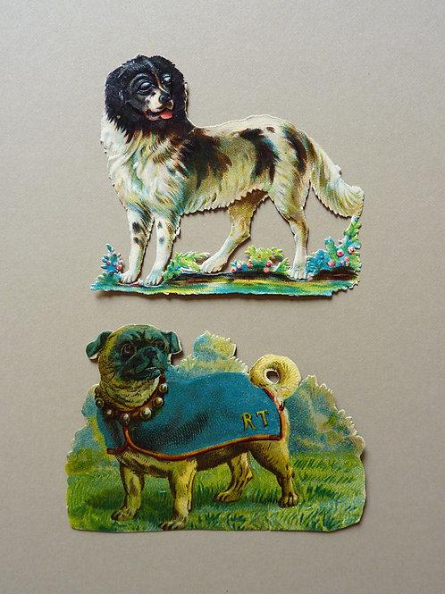 Smart Pug and Hunting Dog