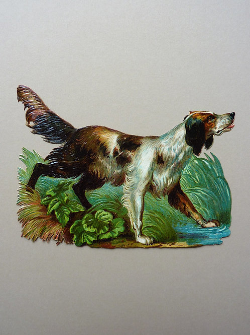 Large Hunting Dog, Very Detailed
