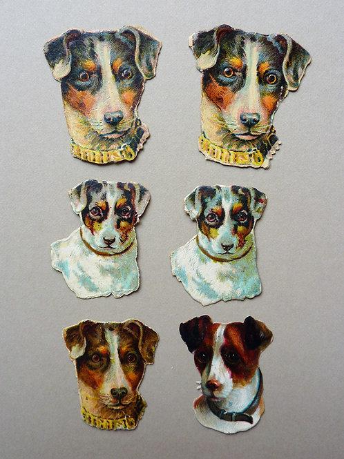 Six Terriers