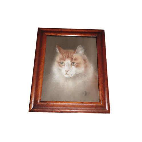 Lovely Victorian Pastel Of A Ginger Cat Under Glass Signed And Dated LB 1898