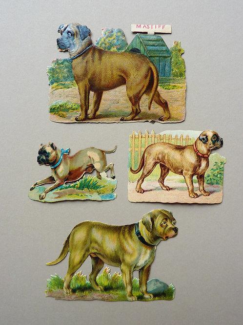 Four Mastiffs Standing