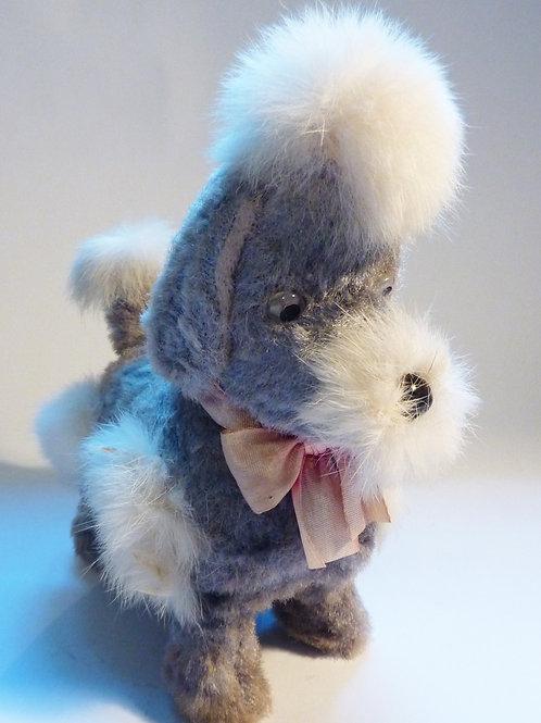 Fluffy Grey Poodle