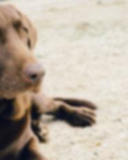 perro-de-ojos-verdes_442-19320914.jpg