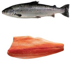 Salmon_edited_edited_edited.png