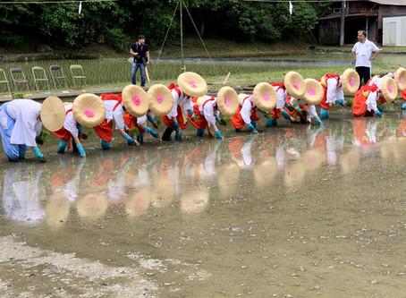 イセヒカリ御田植祭斎行