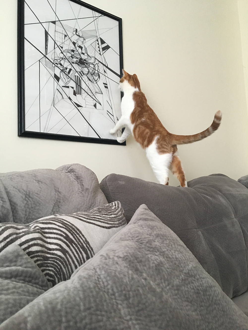 cat standing on the couch looking at artwork on the wall