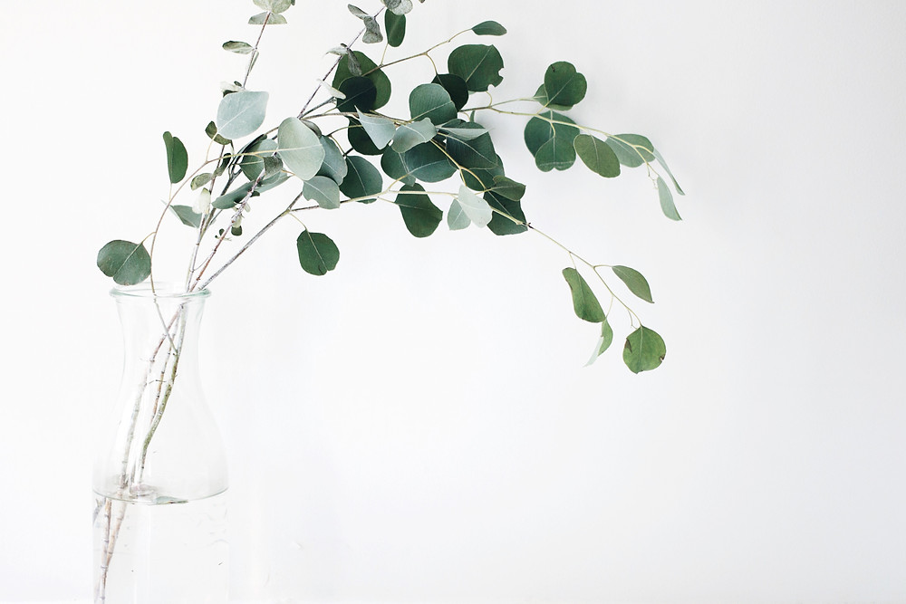 leaves in a clear vase