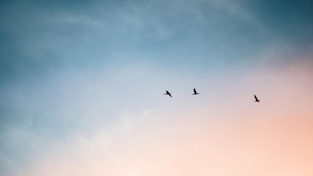 3 birds flying
