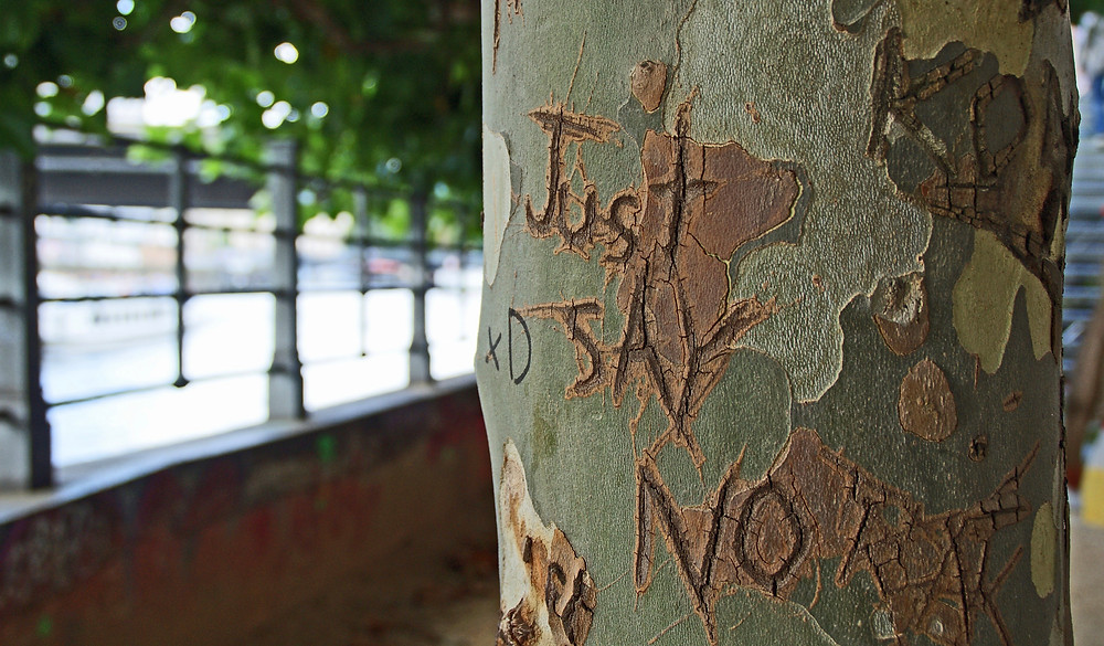 "Tree with ""just say no"" carved into it"