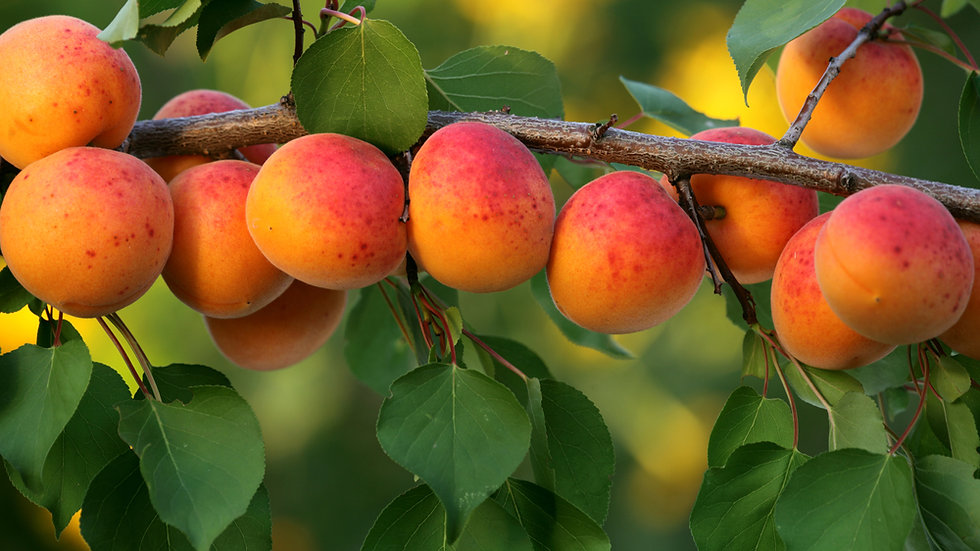Fruit Trees and Soft Fruits