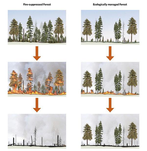 Wildfire Thinning Leavenworth.jpg