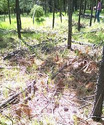 forest wood debris leavenworth