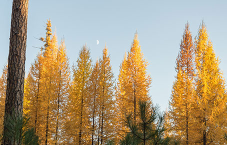 Our area's most fire resilient trees