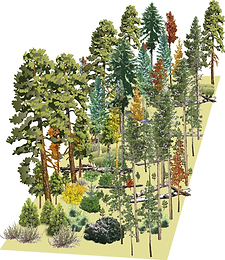 bad wildfire forest.png