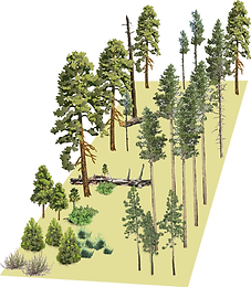 good wildfire thinning pic.png