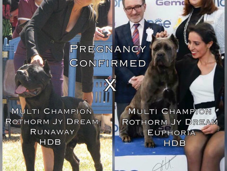 Nakoa Kennels is proud to announce the confirmed mating of Multi Champion Rothorm Jy Dream Runaway x