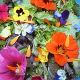 salade-fleurie-carré.jpg