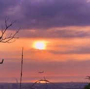 夕陽老樹班機