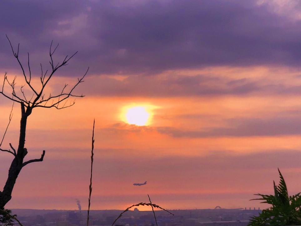 夕陽老樹班機  小花野草人家
