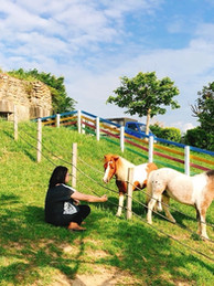 跟寵物馬徜徉海灣星空