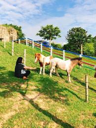 跟著寵物馬徜徉海灣星空